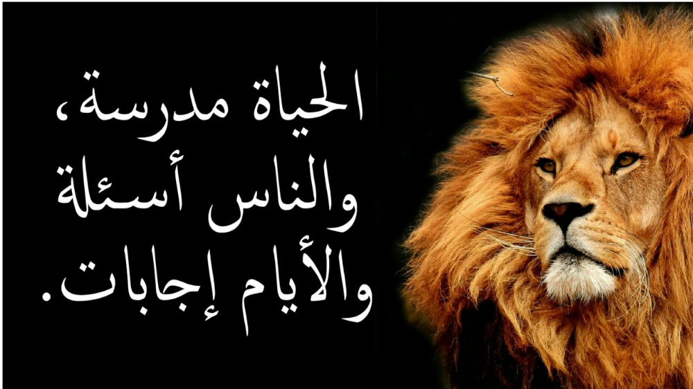على راي المثل Fun Quotes Funny Funny Arabic Quotes Funny Quotes