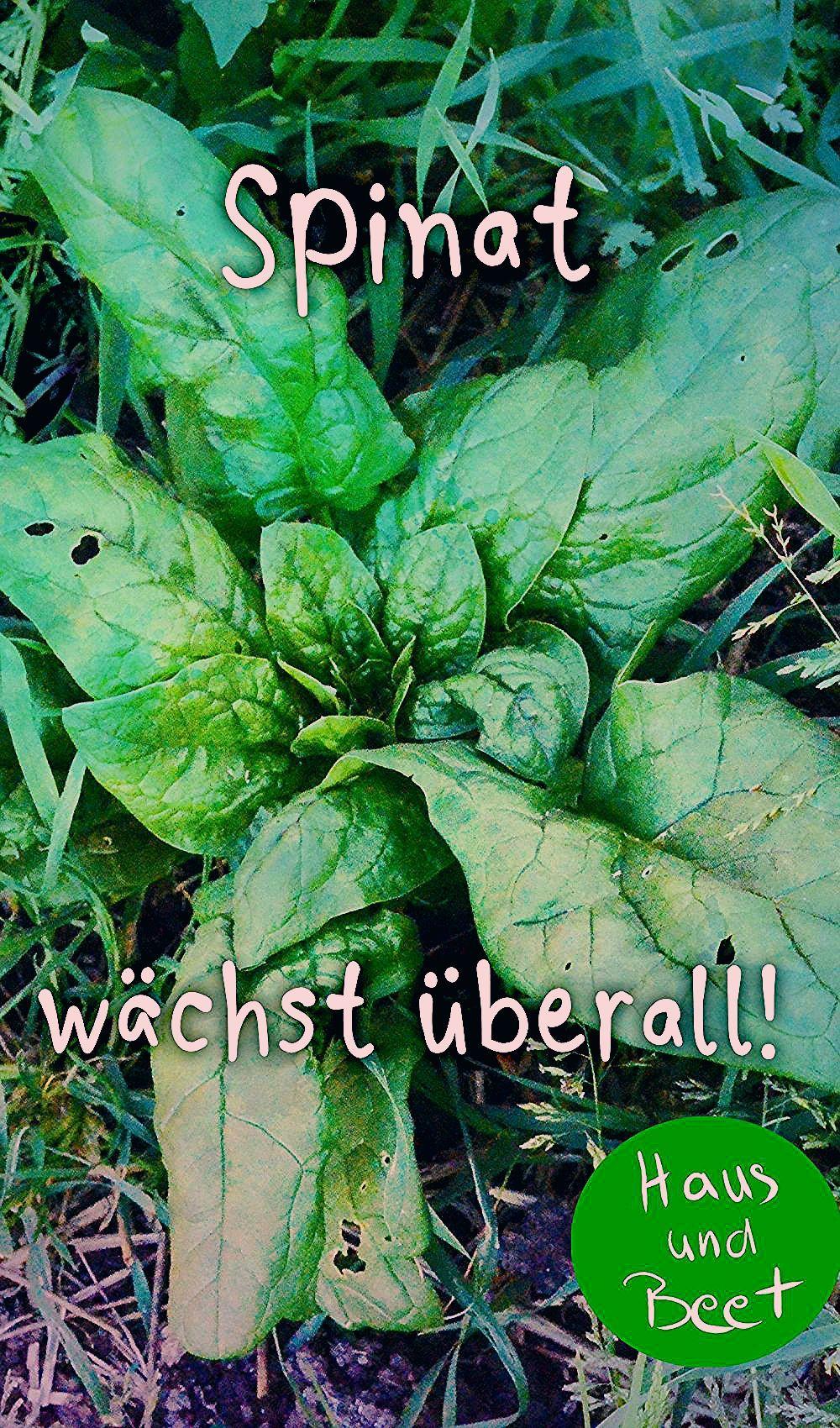 Photo of Spinat – die Energiebombe aus dem Garten – Haus und Beet