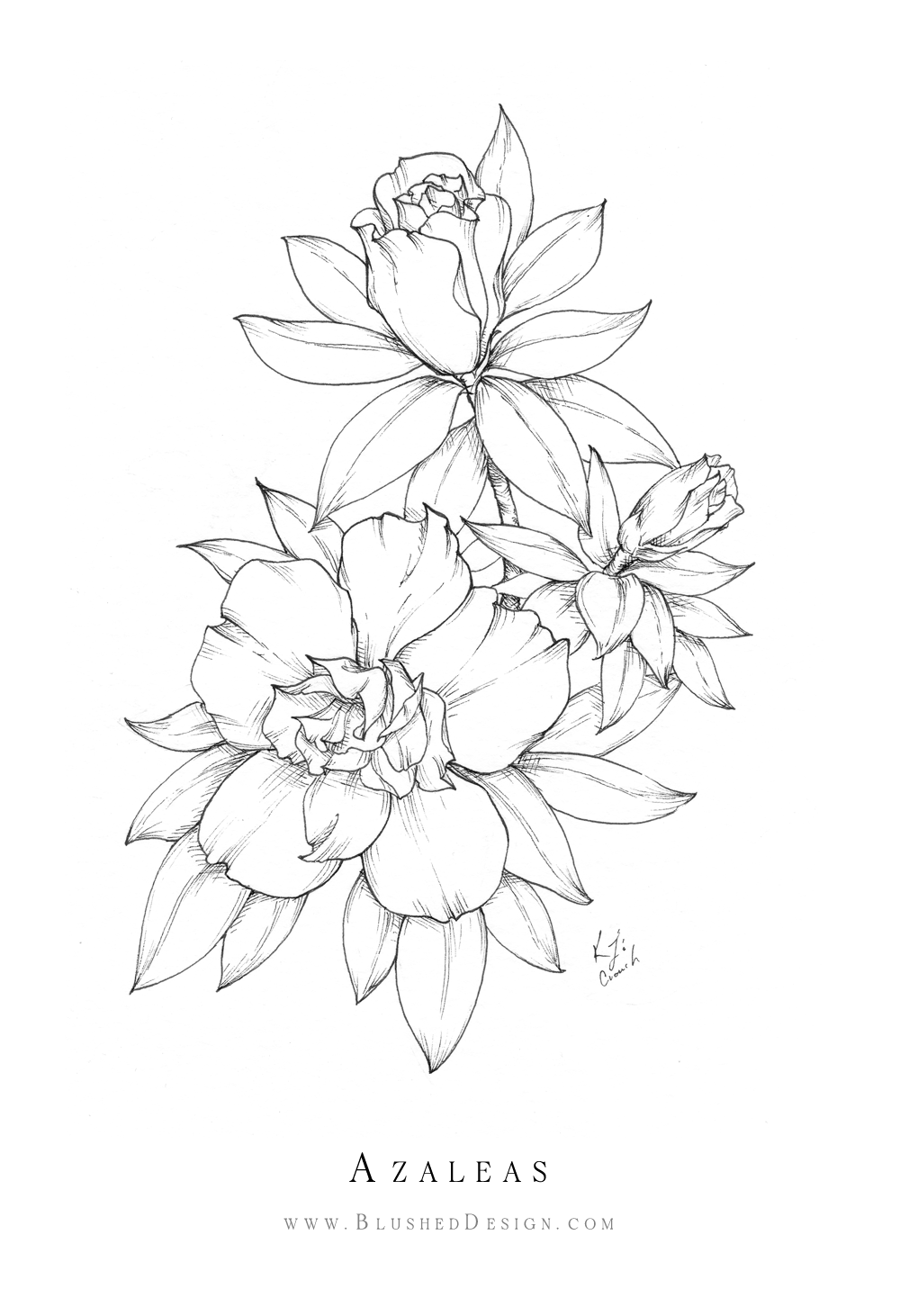 Inktober Flower Drawings 2019 Blushed Design In 2020 Realistic Flower Drawing Beautiful Flower Drawings Cute Flower Drawing