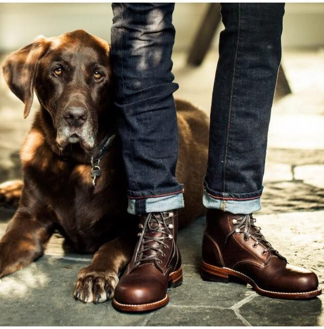 What looks more serious  That dog or those boots  (photo  Dreist ... 3741196b35c4
