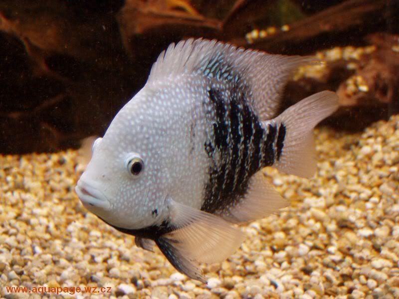 Pin By Steven Garrett On Freshwater Fish Cool Fish Tropical Fish Freshwater Fish