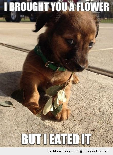 Funny Dog Pictures with Captions   cute puppy flower eated animal ...