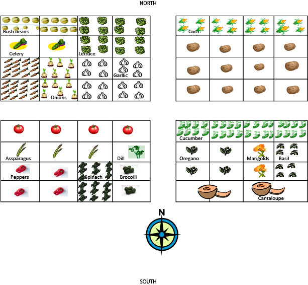 How Many Plants Can You Grow