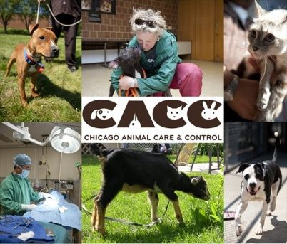 Love Animals Become A Volunteer Chicago Animal Care And Control