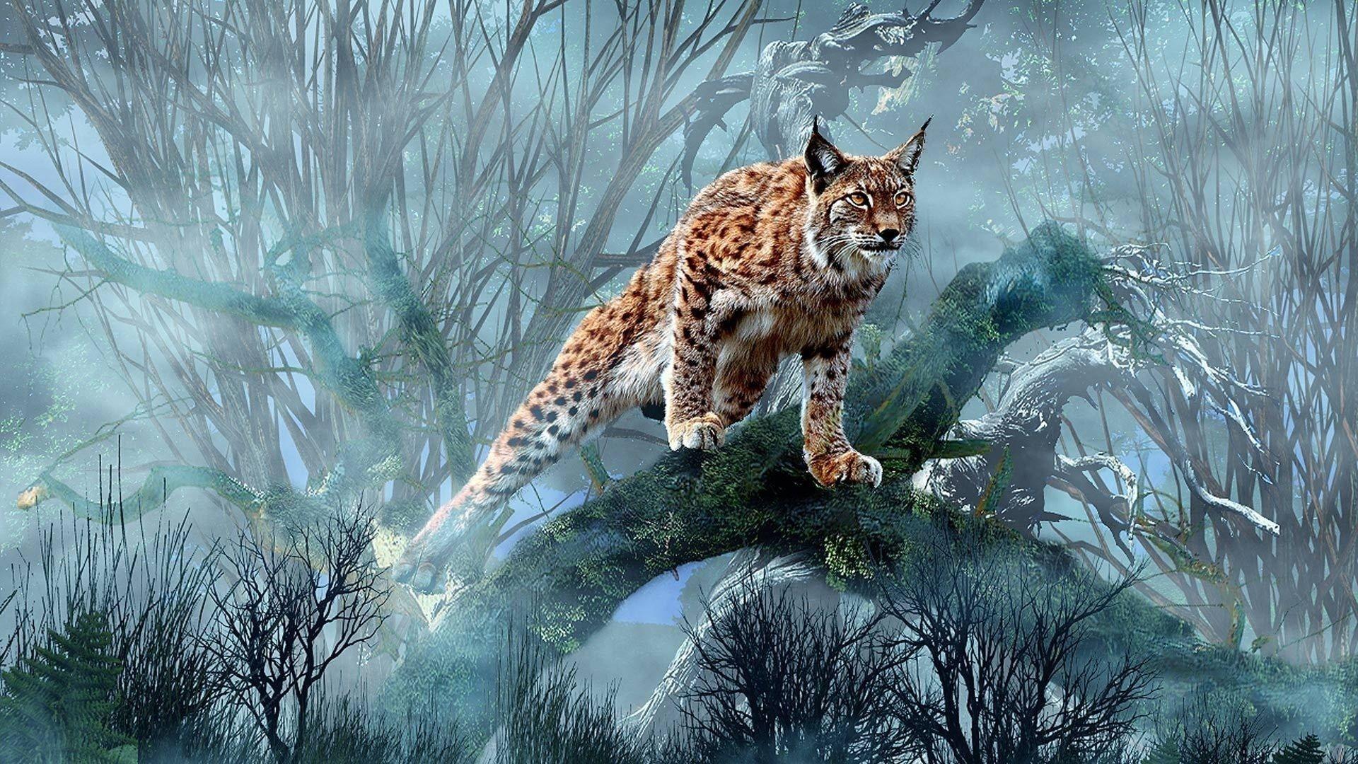 Lynx Big Cat Android Tablet Wallpaper Nature Art Artwork Tabletwallpapers Bigcats Animals Pets Cats Big Cats