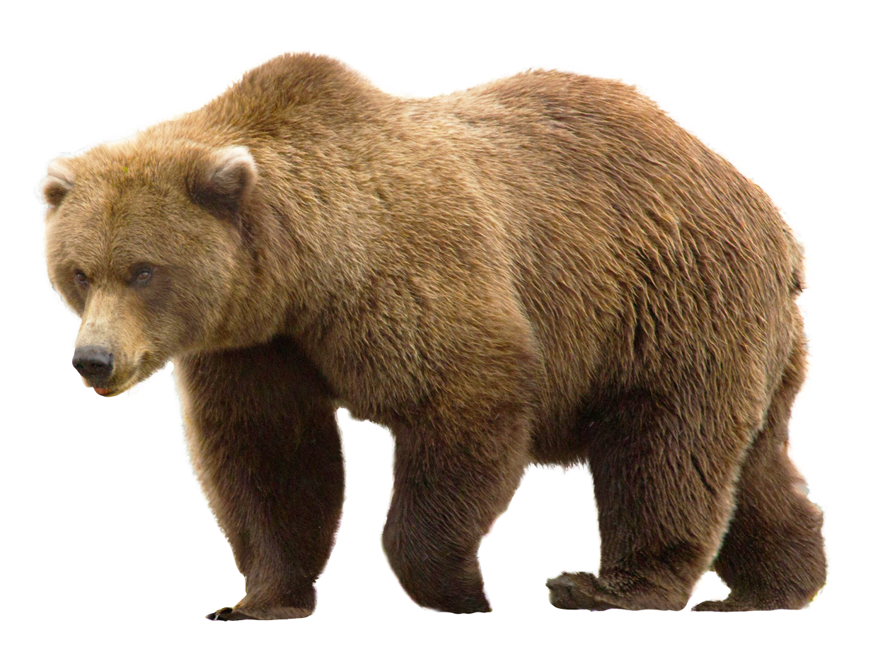 Bear Png Image Jerrycans