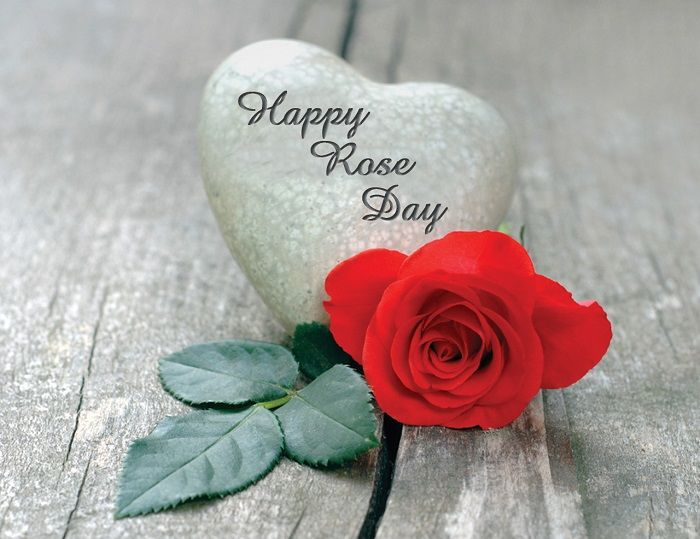 Rose Day Hd Wallpaper With Images Happy Rose Day Wallpaper