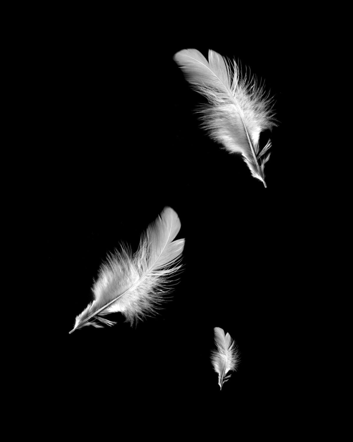 image result for silver feathers falling on a black