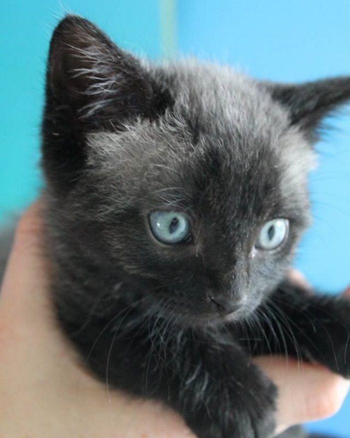 After A Couple Rescued This Lost Kitten They Were Stunned When Its Fur Started To Change Color Page 14 Of 20 Kitten Animals Grey Kitten