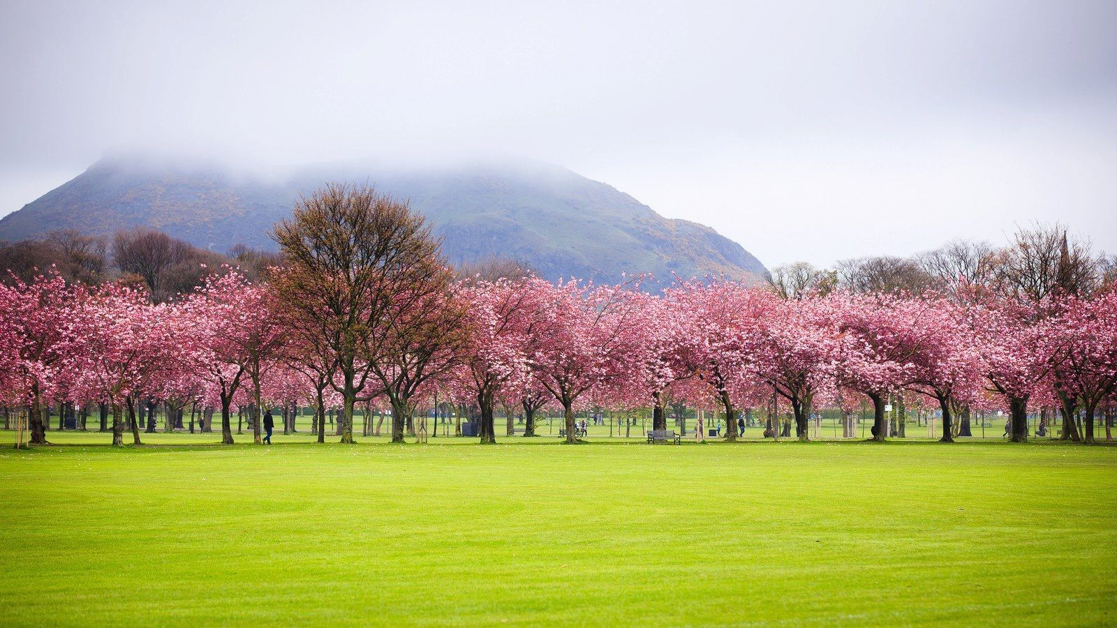 Ah I Love The Cherry Blossom On The Meadows Architectuur