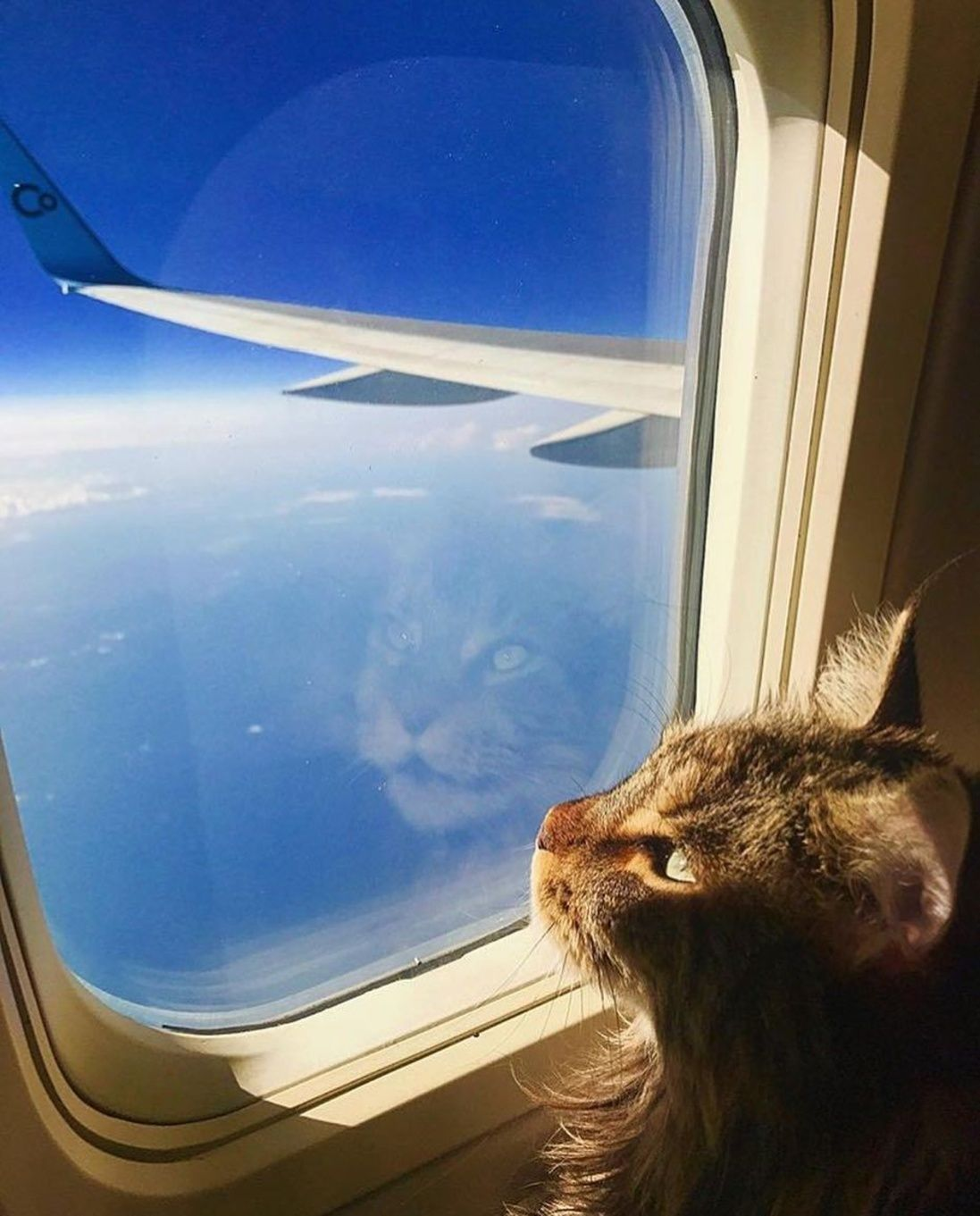 This Cat Has Its Own Private Plane Cats Beautiful Cats Pictures Adventure Cat