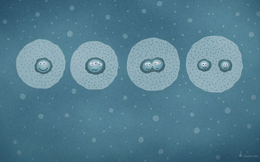 Cell Division wallpaper