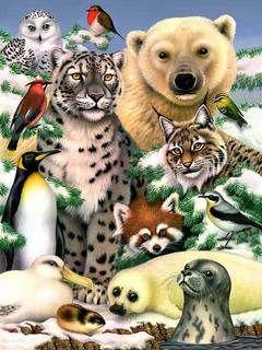 Collage Of Wild Animals
