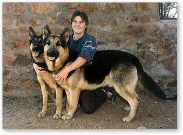 Gumtree Dogs And Puppies For Sale In Sa