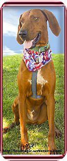 Redding Ca Redbone Coonhound Meet Avery Fun Boy A Dog For