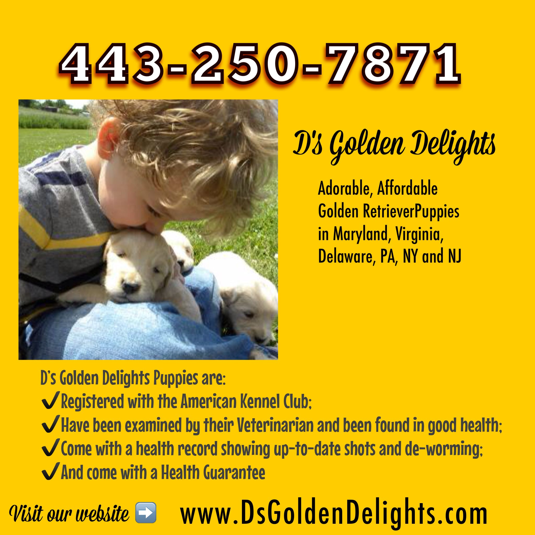 Www Dsgoldendelights Com Golden Retriever Breeder In Maryland The