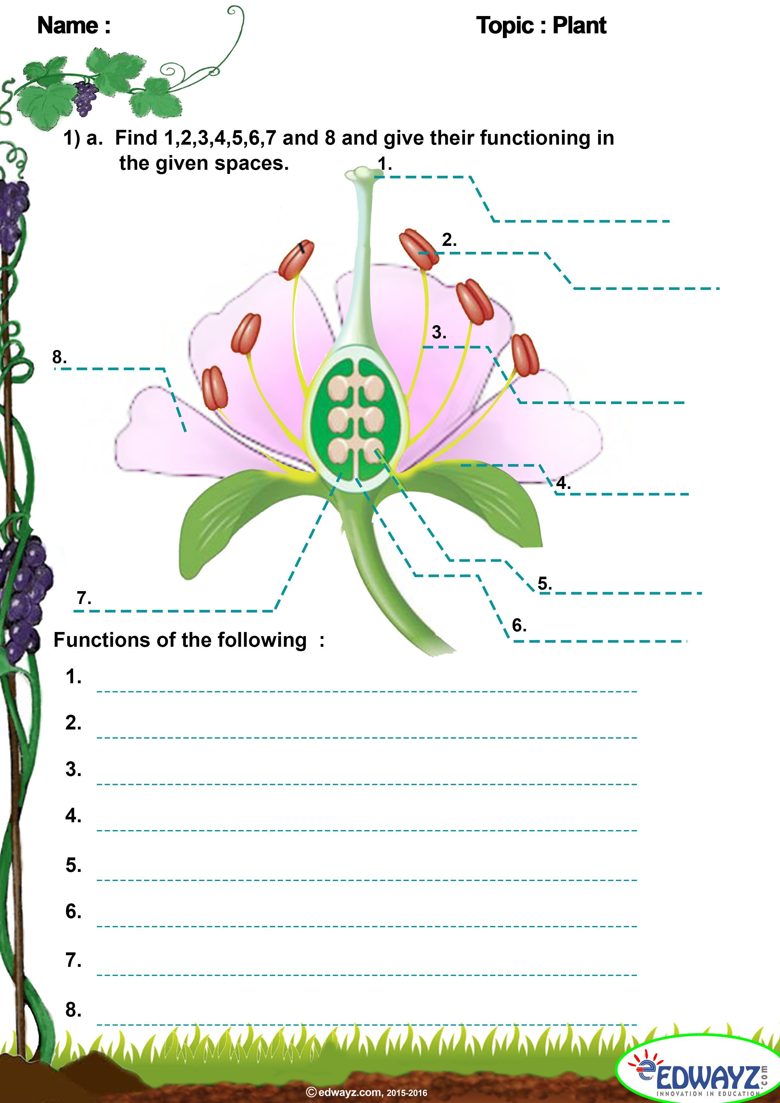 Structure And Parts Of The Flower In