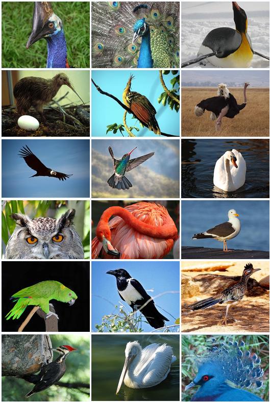 Bird Classification Green Animals Birds World Birds
