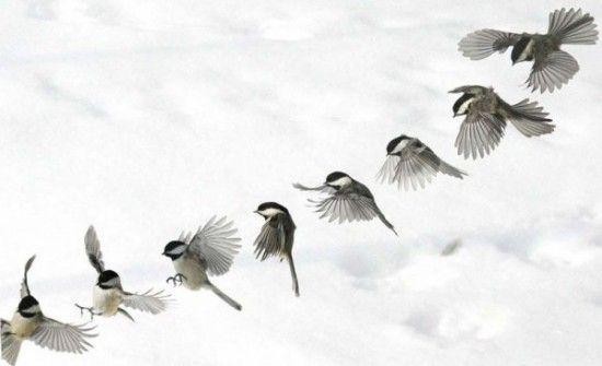 photo en s rie oiseau et skieur voart dessin oiseau oiseaux et dessin. Black Bedroom Furniture Sets. Home Design Ideas