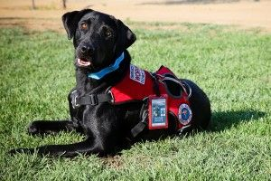 Thinking About Getting A Service Dog My Advice To You Service