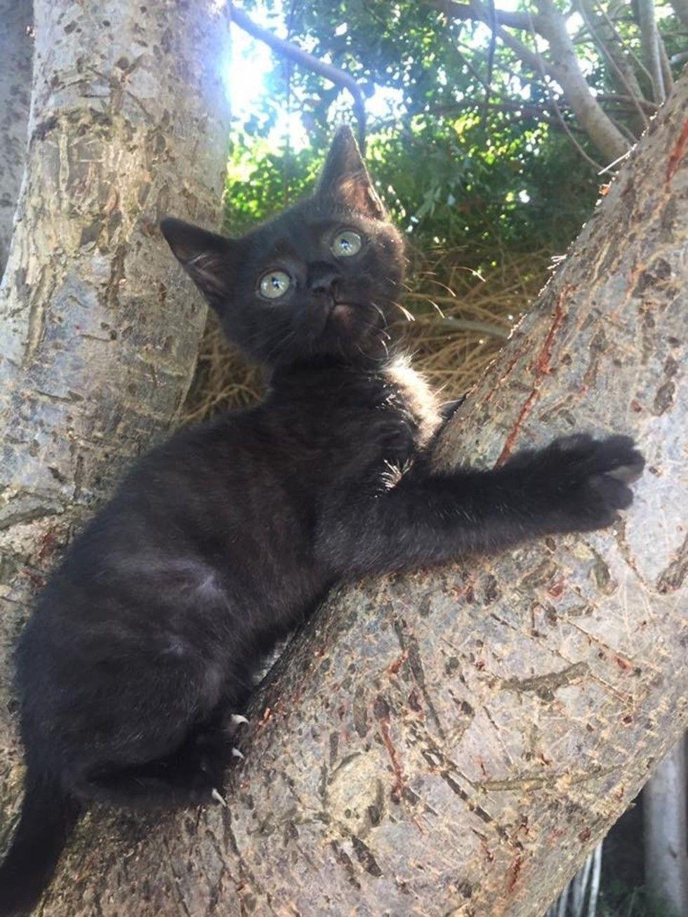 Kitten Found In Wooden Reel Survives Despite Having No Food And Water For Days Kitten Kitten Rescue Tiny Kitten