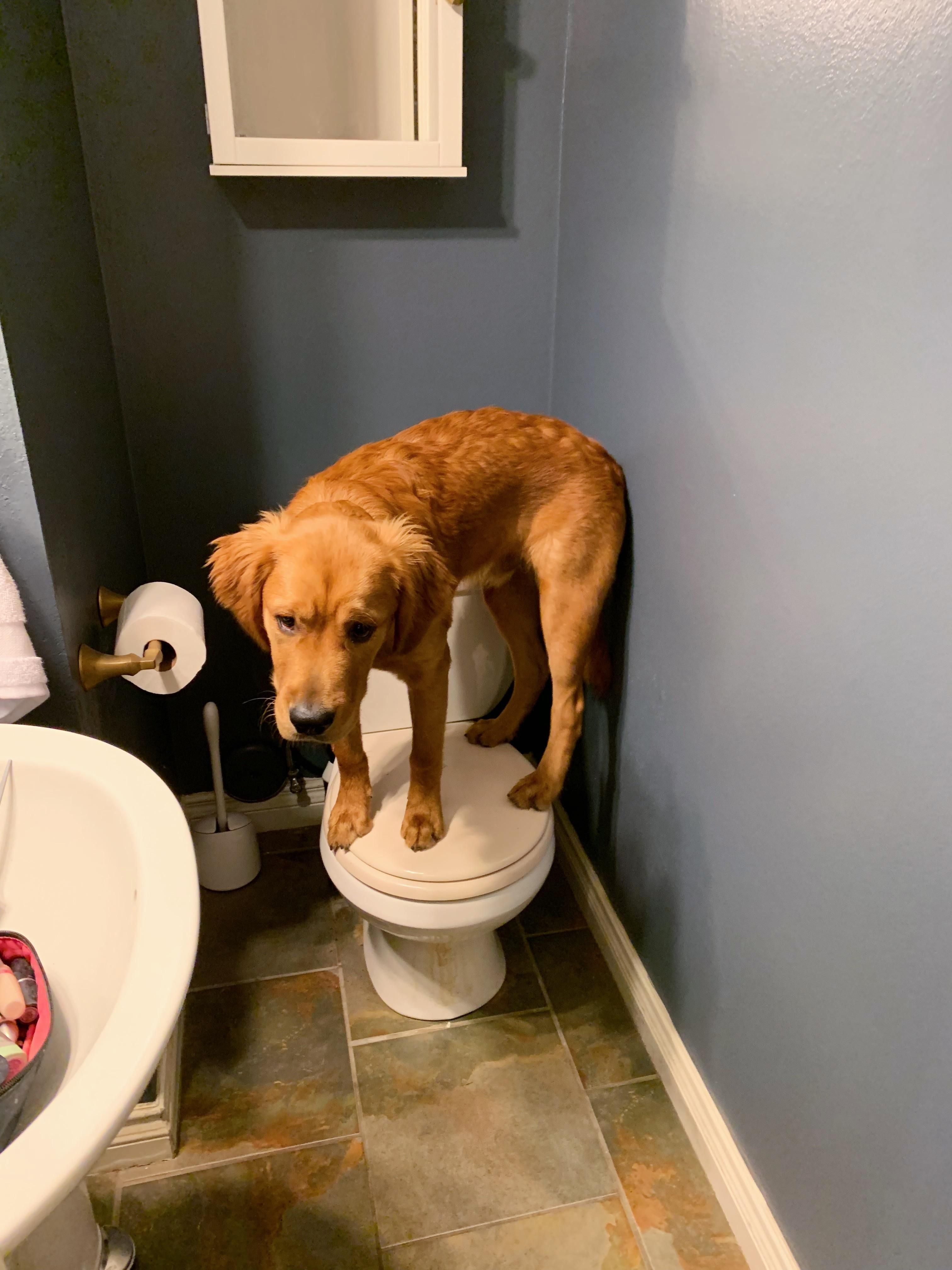 So Mom is this what you mean by potty training? Fluffy
