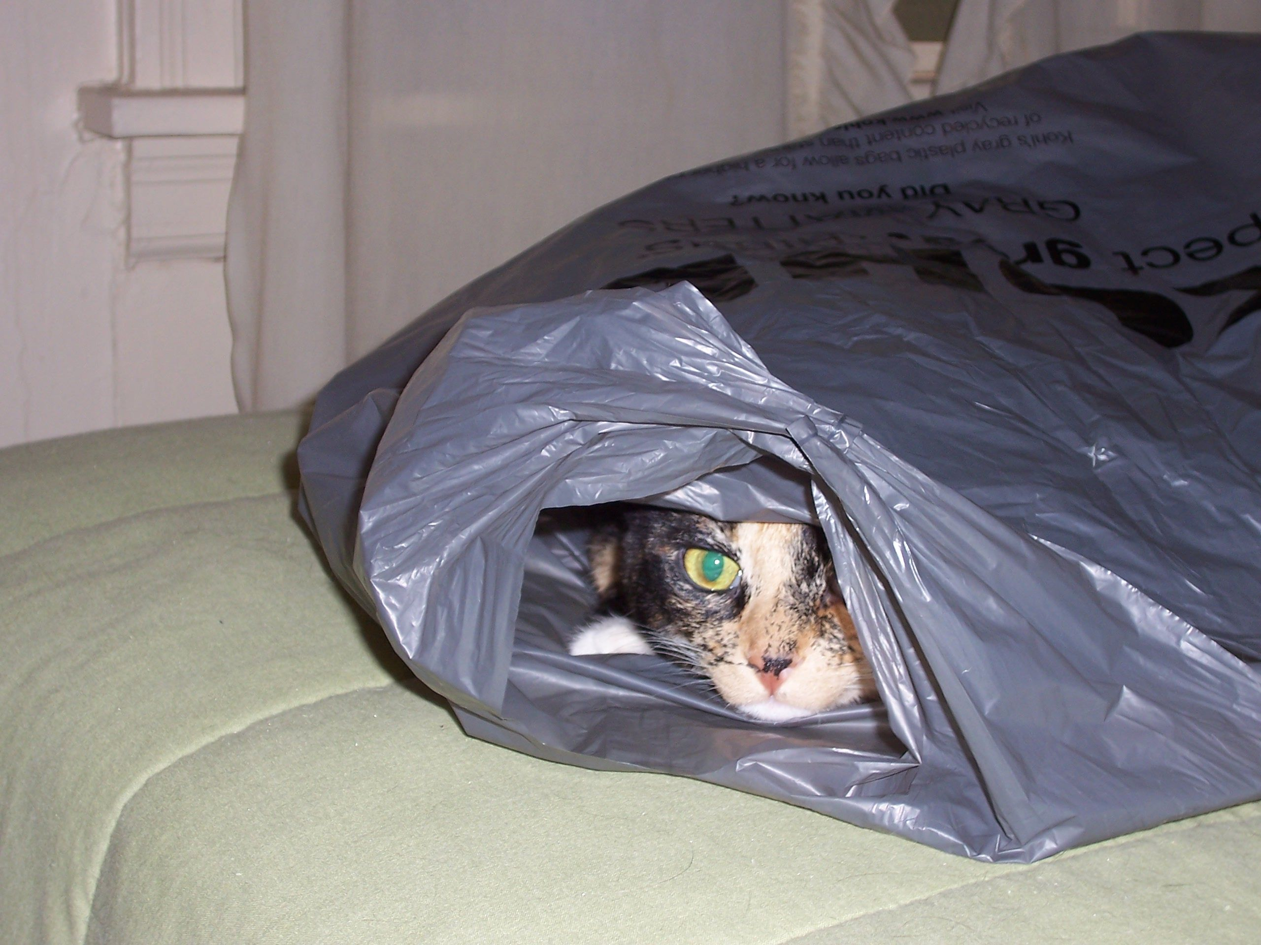 Lucy...peeking...