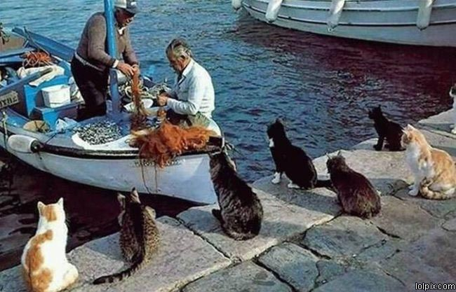 Will ya look at that ~ those cats have the fisherman trained to come right to them~!~