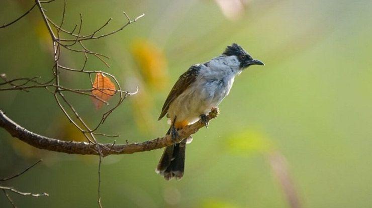 Pin Oleh Birdsny Di Suara Burung Fotografi Hewan Burung Hewan