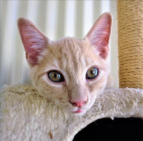 Hi There I M Rascal From Ipswich I M Very Playful And Fun But I Also Like My Alone Time Pop In To Meet Me Today Http Bit Ly Adoption Animals I Am Alone