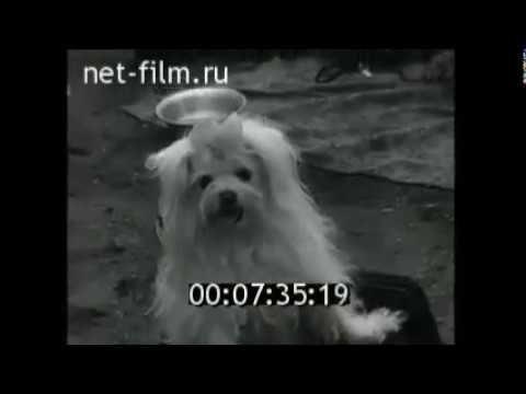 киножурнал новости дня ссср1950 70 Dogs Historyru