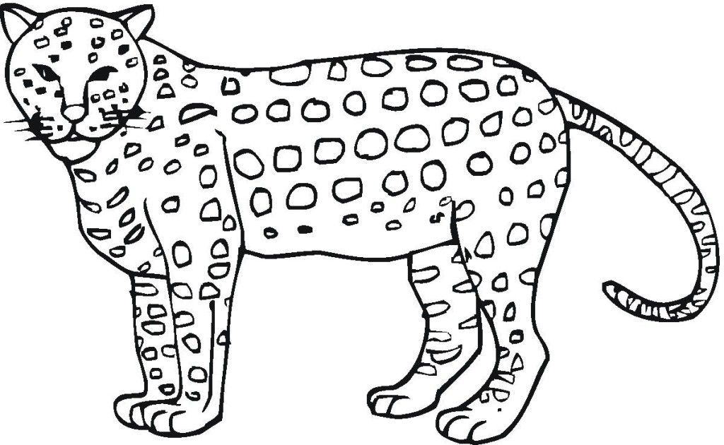 Free Printable Cheetah Coloring Pages For Kids Coloring