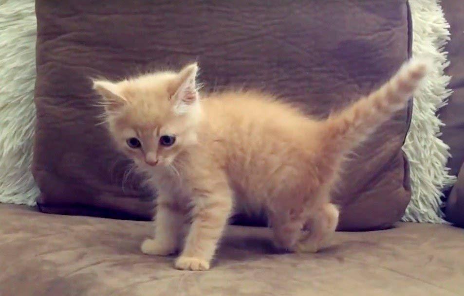 Kitten purring constantly