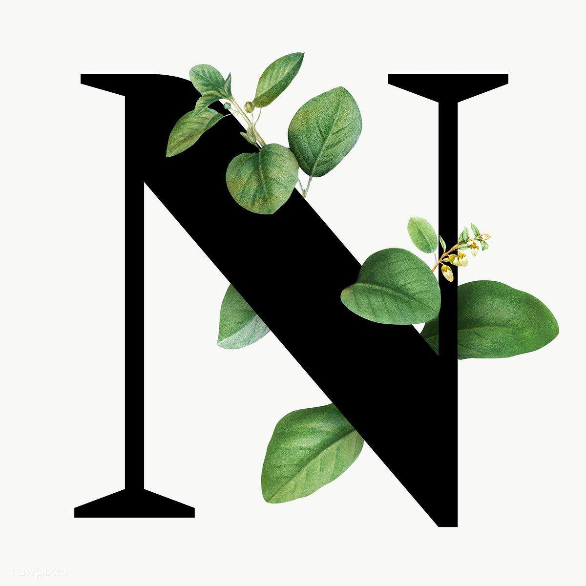 Botanical Capital Letter N Transparent Png Premium Image By Rawpixel Com Aum Lettering Alphabet Fonts Alphabet Letters Design Letter N