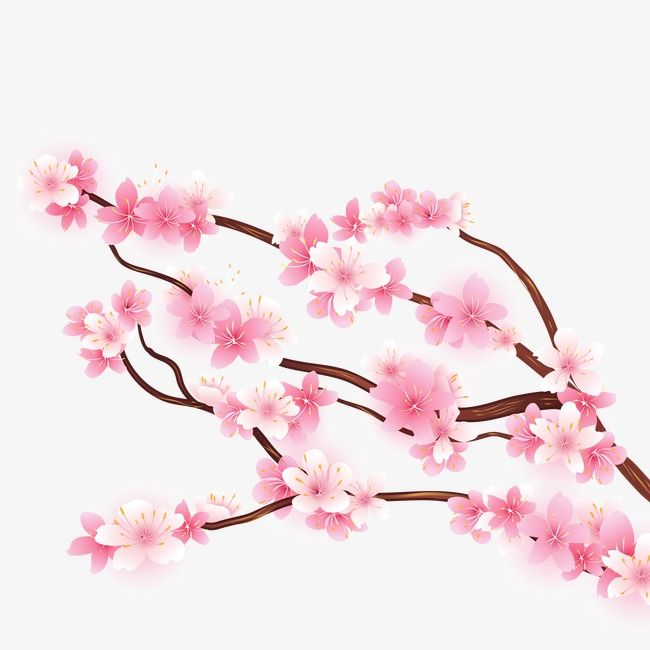 Millions Of Png Images Backgrounds And Vectors For Free Download Pngtree Cherry Blossom Cherry Blossom Tree Tree Images