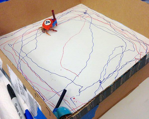 Have your crabs create art! #DIY - PetDIYs.com   Kenny homeschool ...