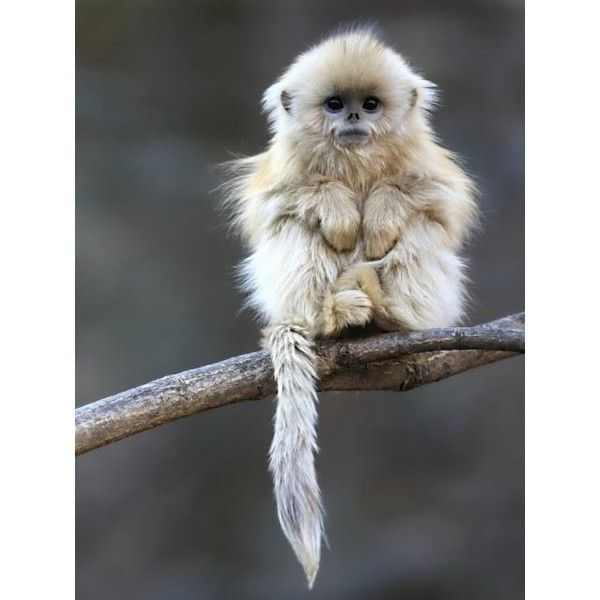 Cute Monkey photo - download this photo for free ❤ liked on Polyvore featuring animals
