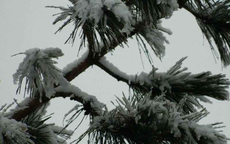 my response to Wonderstruck Wednesday photo prompt: today 'TREE'  ongoing snowfall resulting in beautiful photo odyssey to express life as I #livewonderstruck