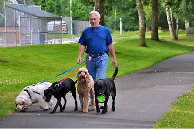 Belt Loop T Bolt Hands Free Walking For Two Dogs With Images