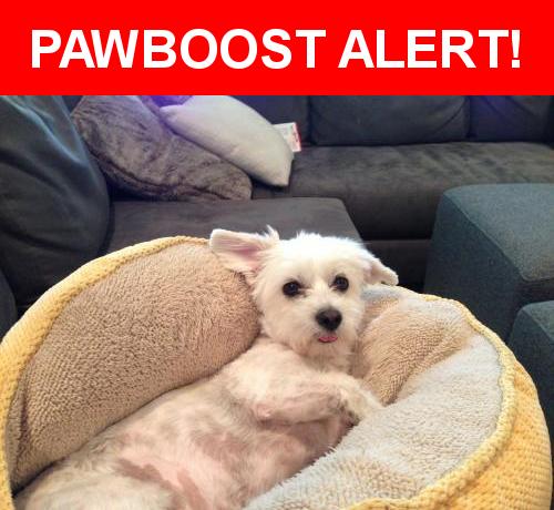 Please spread the word! Ella was last seen in San Jose, CA 95126.    Nearest Address: Near Hanchett Ave & Dana Ave