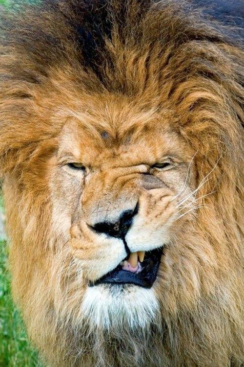 40 divertidas fotografías de animales tomadas en el momento preciso