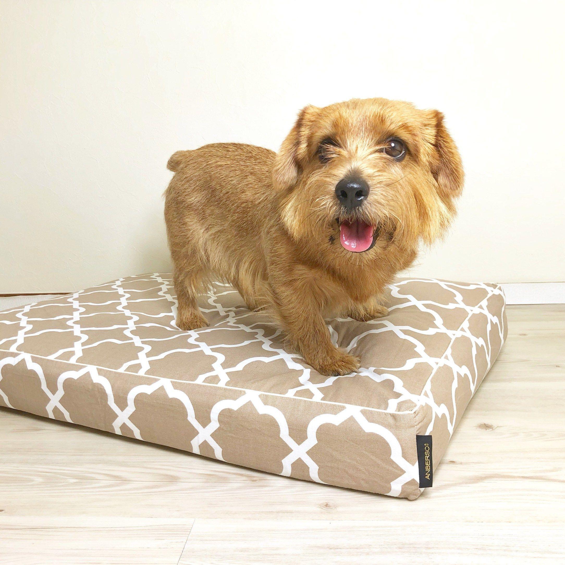 おやつの時間で再びやる気が出てきたメンちゃん 犬のベッド アンベルソ公式ブログ 犬 大型犬 小型犬