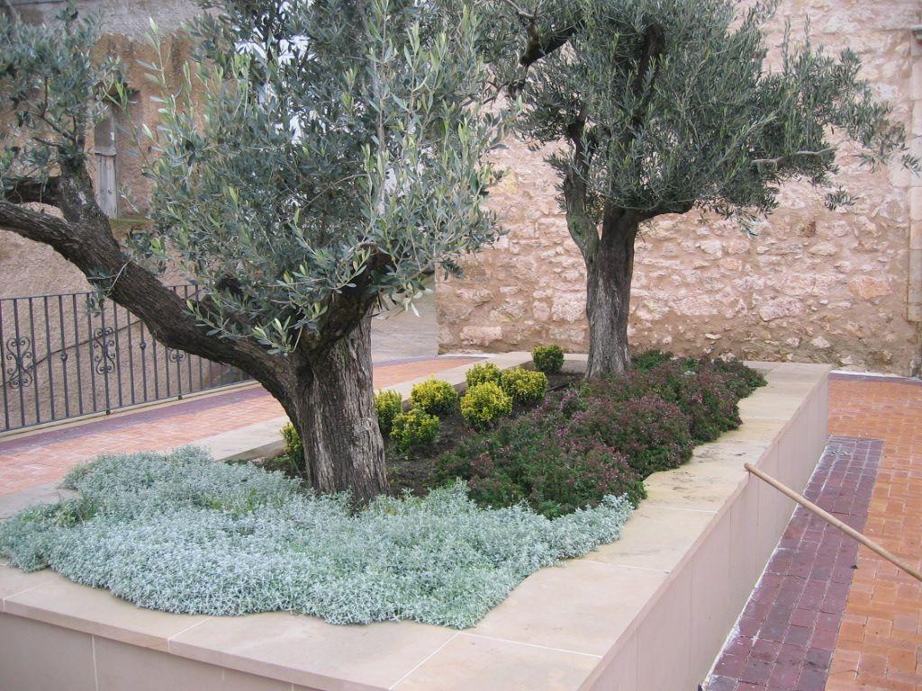 Jardinera plantaci n de olivos y ajardinamiento - Jardineras para jardin ...