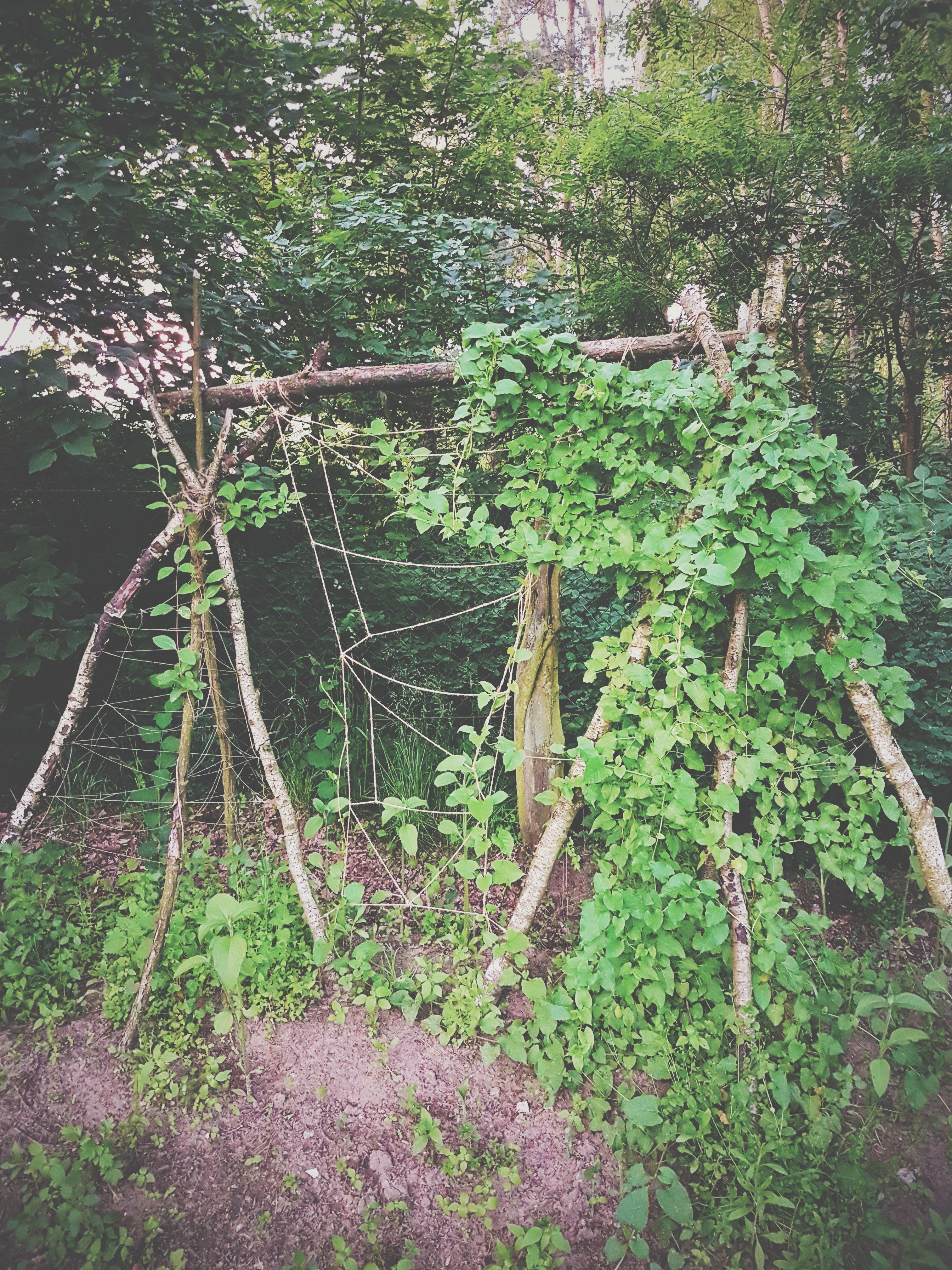 Selbstgemachter Sichtschutz Aus Kletterpflanzen Biotopica Farm