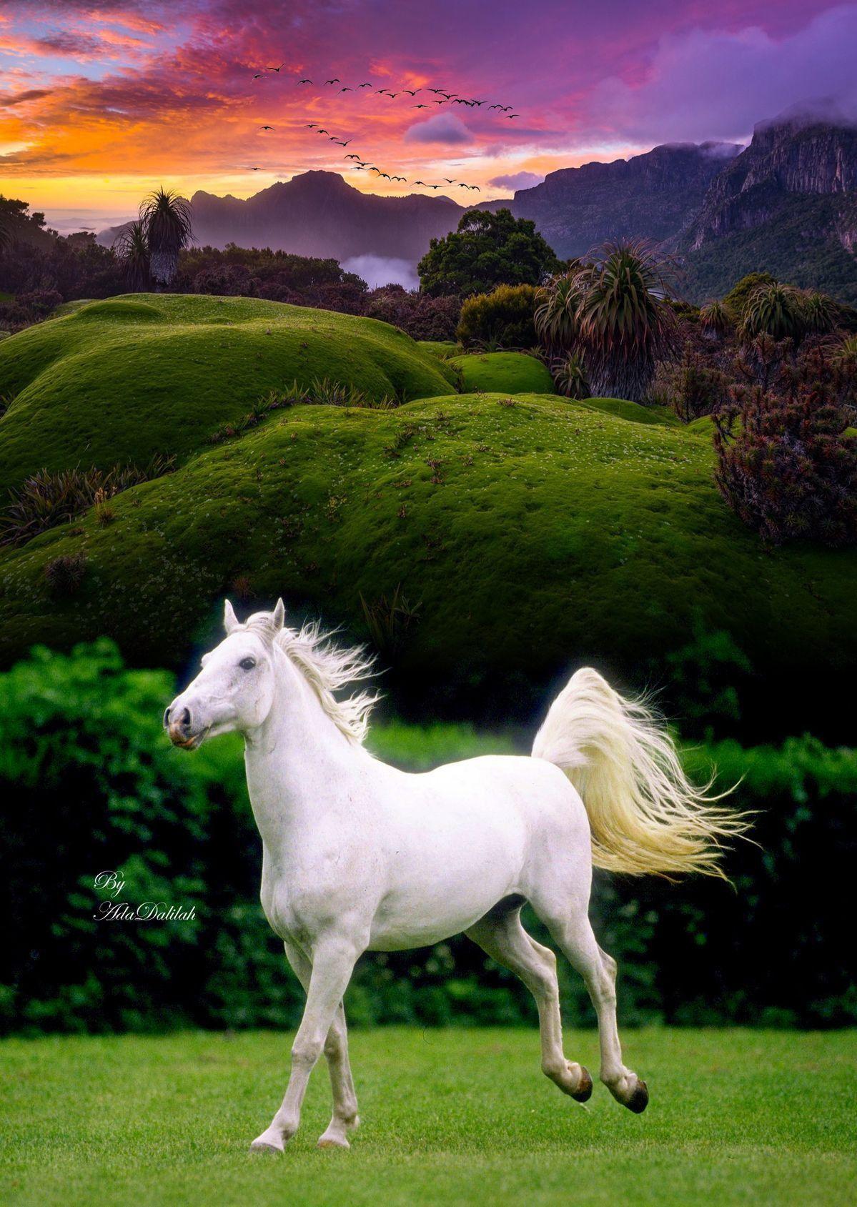 Pin By Abu Saif On Beautiful Horses Most Beautiful Horses Animals Beautiful Beautiful Horses