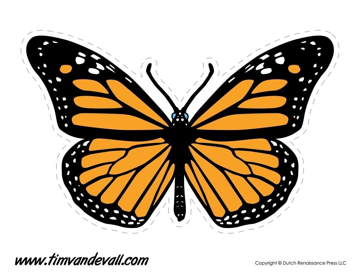 Monarch Butterfly Template Printable Flogfolioweekly Intended