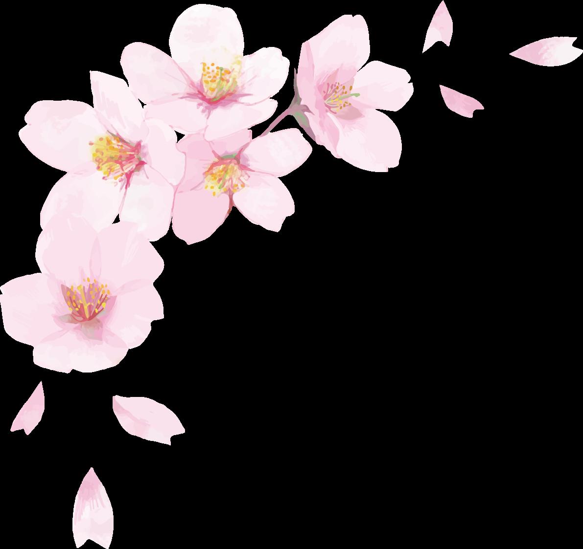 リアル綺麗な桜 花びらイラスト 右上角用飾り背景なし 透過 無料