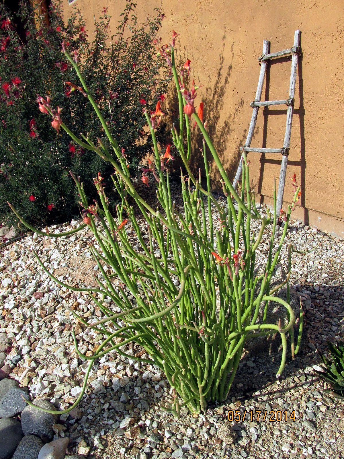 Grasses Xeriscape Trees To Plant