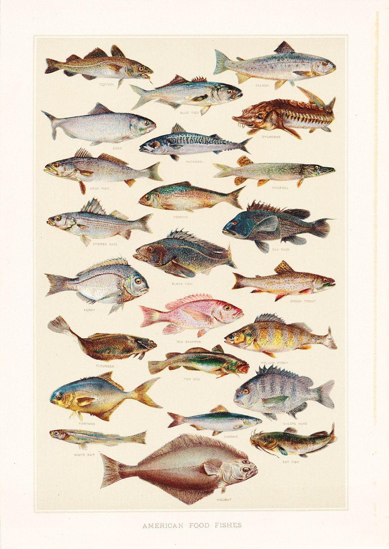 1903 Animal Print - American Food Fishes - Vintage Antique Art ...