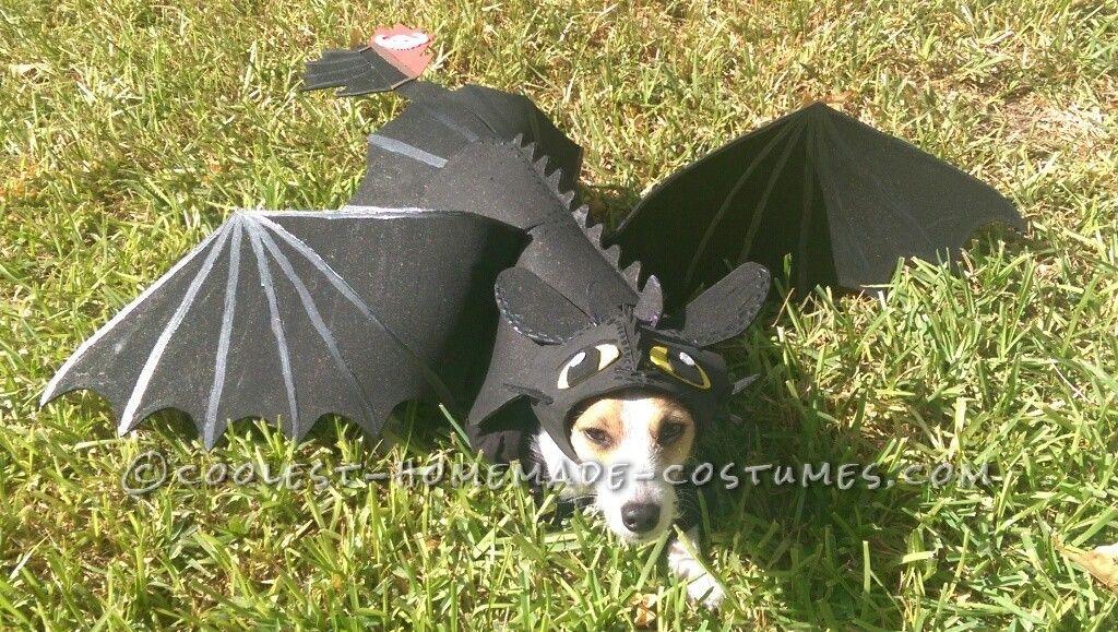 Awesome Diy How To Train Your Dragon Dog Costume Dog Dragon